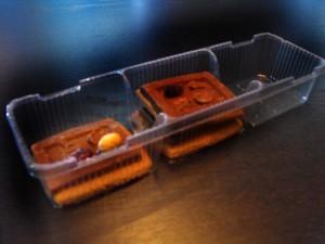 Caserole din plastic pentru biscuiti  Caserole plastic biscuiti caserole biscuiti ciocolata 3 compartimente 650 11 300x225