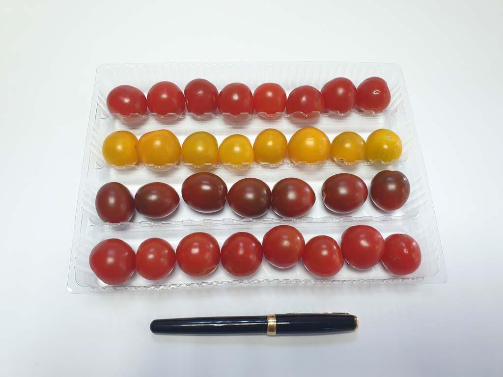 4105 - fructe si legume (2)